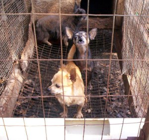 Puppy mills focus on making money, not the health and welfare of the animals they breed.