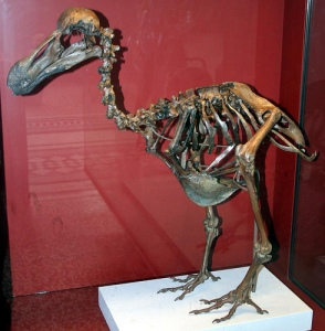 Dodos are extinct...
