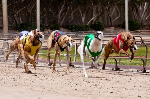 Greyhound racing in the state of Florida continues, but with more restrictions in place in order to monitor their standards of care.