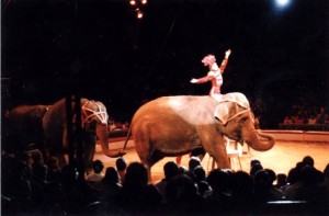 Life with a circus is not humane for elephants.