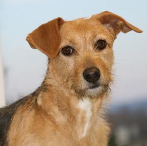 Texas, Washington, and West Virginia now have legislation pending regarding animal abuser registries.