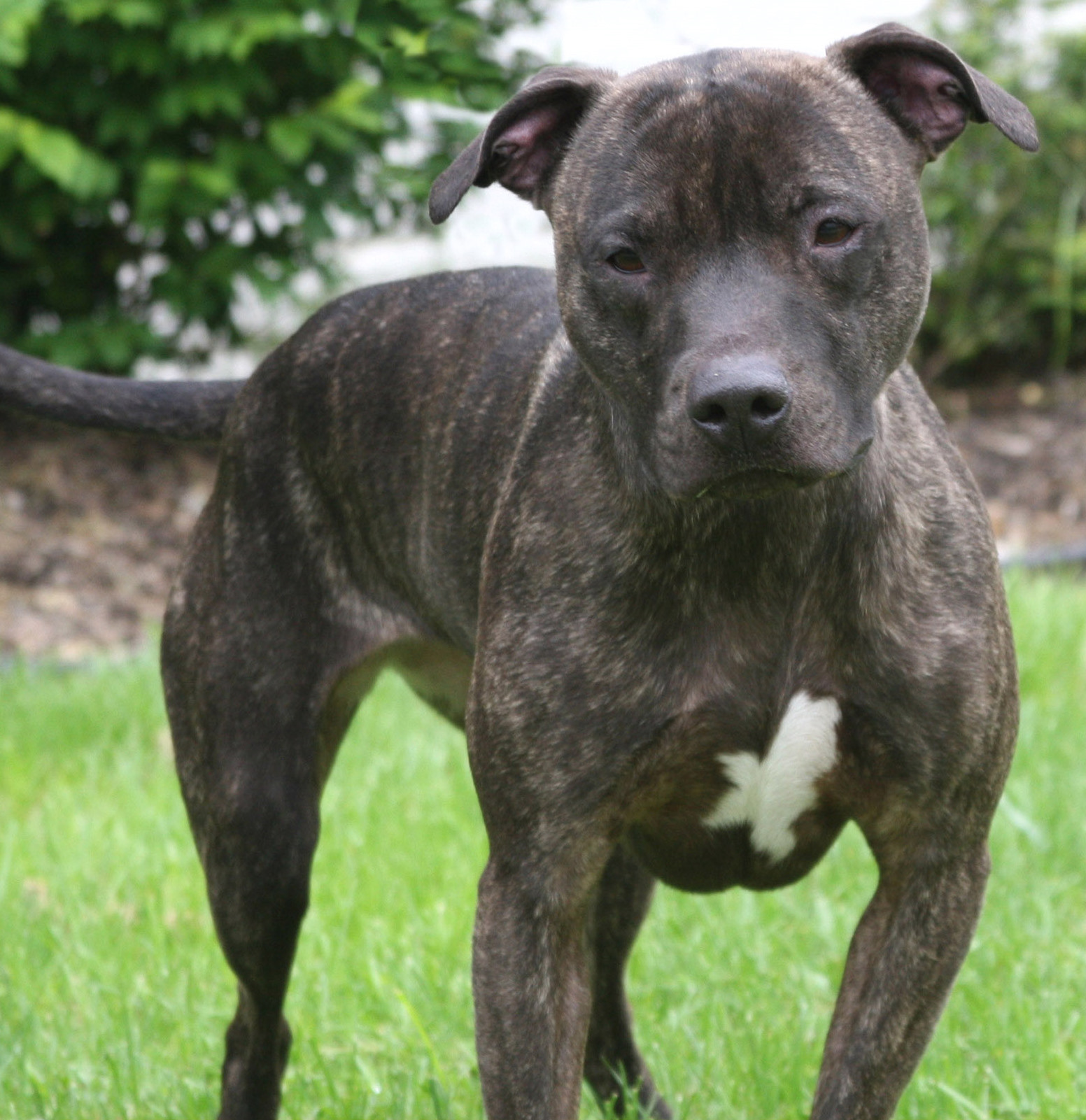 Amendment to Delaware Code Would Save Victims of Dogfighting   The