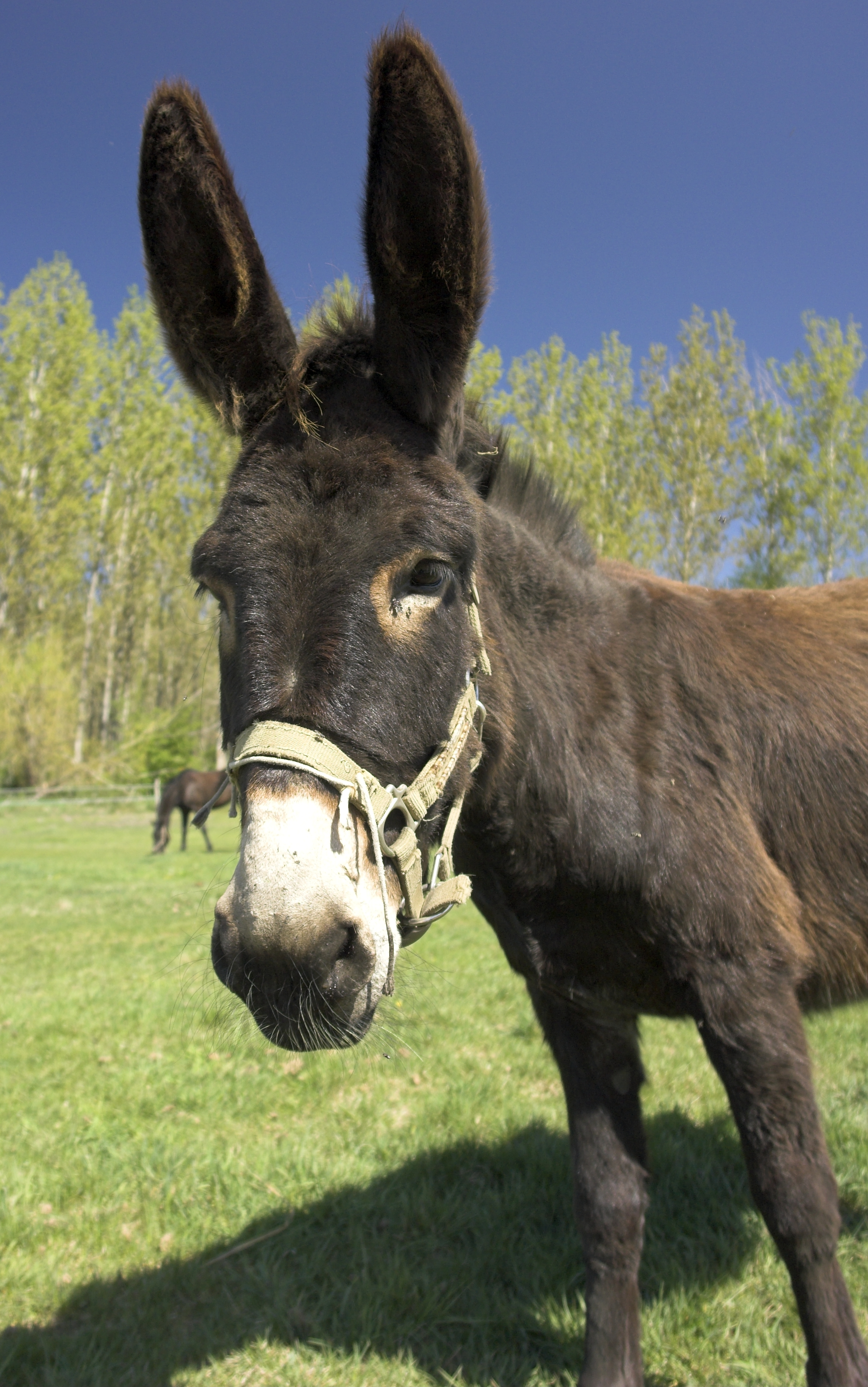 Burros Dodge A Bullet The National Humane Education Society