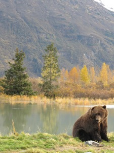 Help protect grizzly bears, say no to hunting.