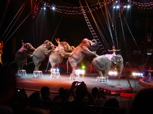 Exotic animals such as these elephants are forced to perform unnatural tricks.