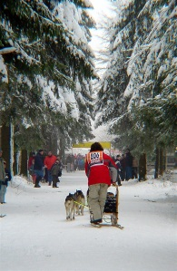 Dogs in the Iditarod endure cruel living conditions and extreme training.