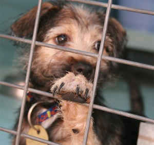 Many animal shelters still consider the use of gas chambers a humane form of euthanasia.