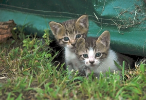 The Spay/Neuter Assistance Fund bill will help control pet overpopulation in states such as West Virginia.