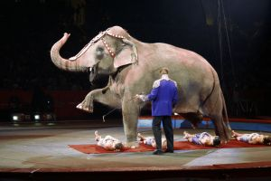 Ringling Bros. Barnum & Bailey Circus will no longer use elephants in performances after 2018.