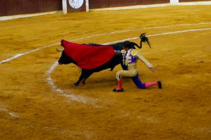 The city of Veracruz, Mexico has placed a ban on bullfighting and all other shows featuring animals.