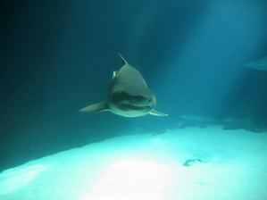 New York has joined several other states in a ban against the sale and possession of shark fins.