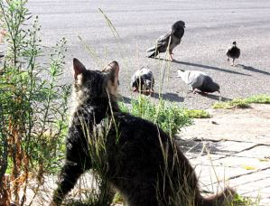 Companion cats that are allowed outdoors are not only at greater risk of harm, but are also likely to harm wildlife.