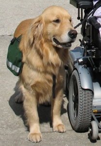Many people are fraudulently identifying their animals as service animals in order to receive certain disability rights.