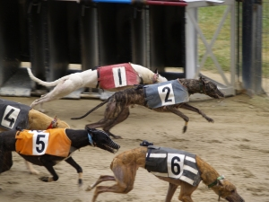 Florida is one of seven states that still support greyhound racing. Seventy-four greyhounds involved with racing died during the last seven months of 2013.