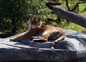 Dangerous Wild Animals Act The National Humane Education Society