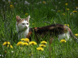 TNR programs prevent feral cats from reproducing, reducing disease and populations over time.