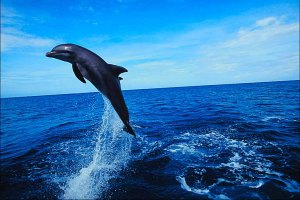 Dolphins deserve the freedom to live out their lives in the wild.