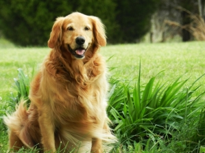 Dogs require daily socialization, exercise, and shelter to live happy lives.